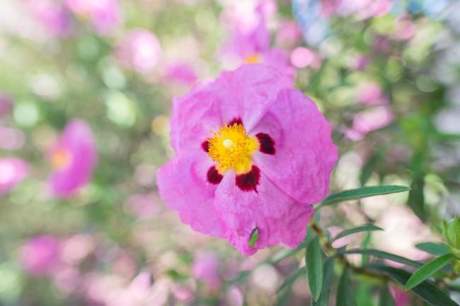 ภาพตัวอย่าง Fuji XF 16mm f/1.4
